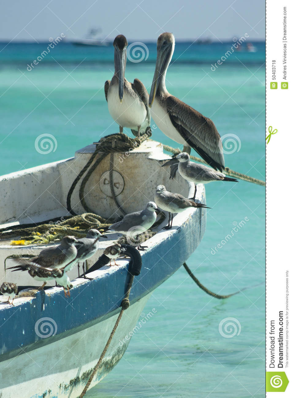 Pelicans And Seagulls Stock Photo Image 50403718