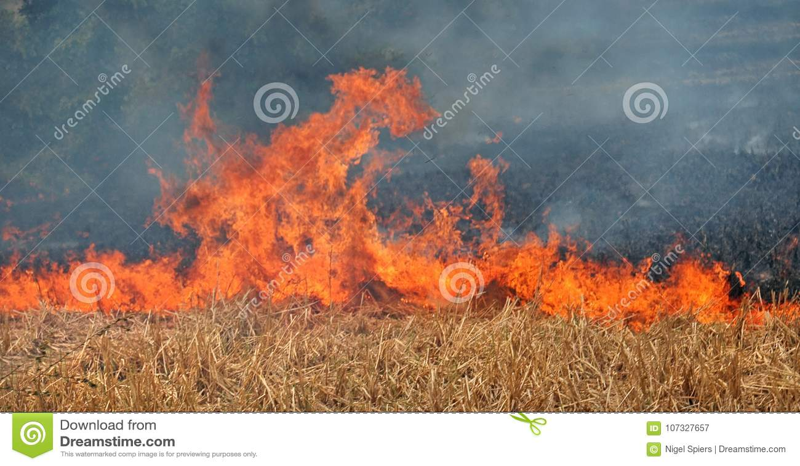 Peligro - el fuego desenfrenado del campo amenaza al fotógrafo