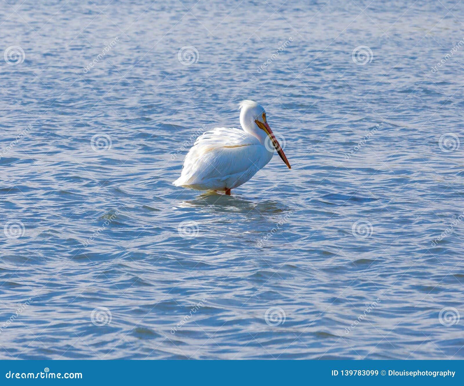 Pelikan, der auf einer Sandbank sitzt