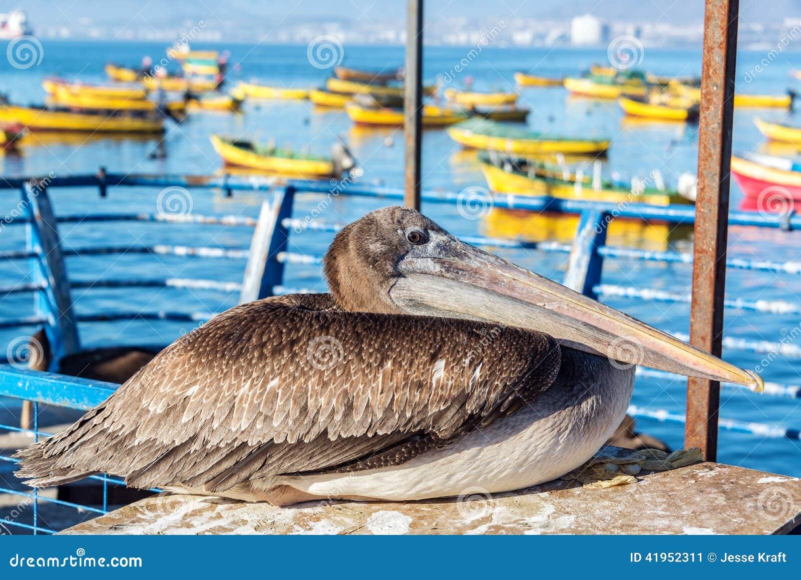 Pelikan i Kolorowe łodzie