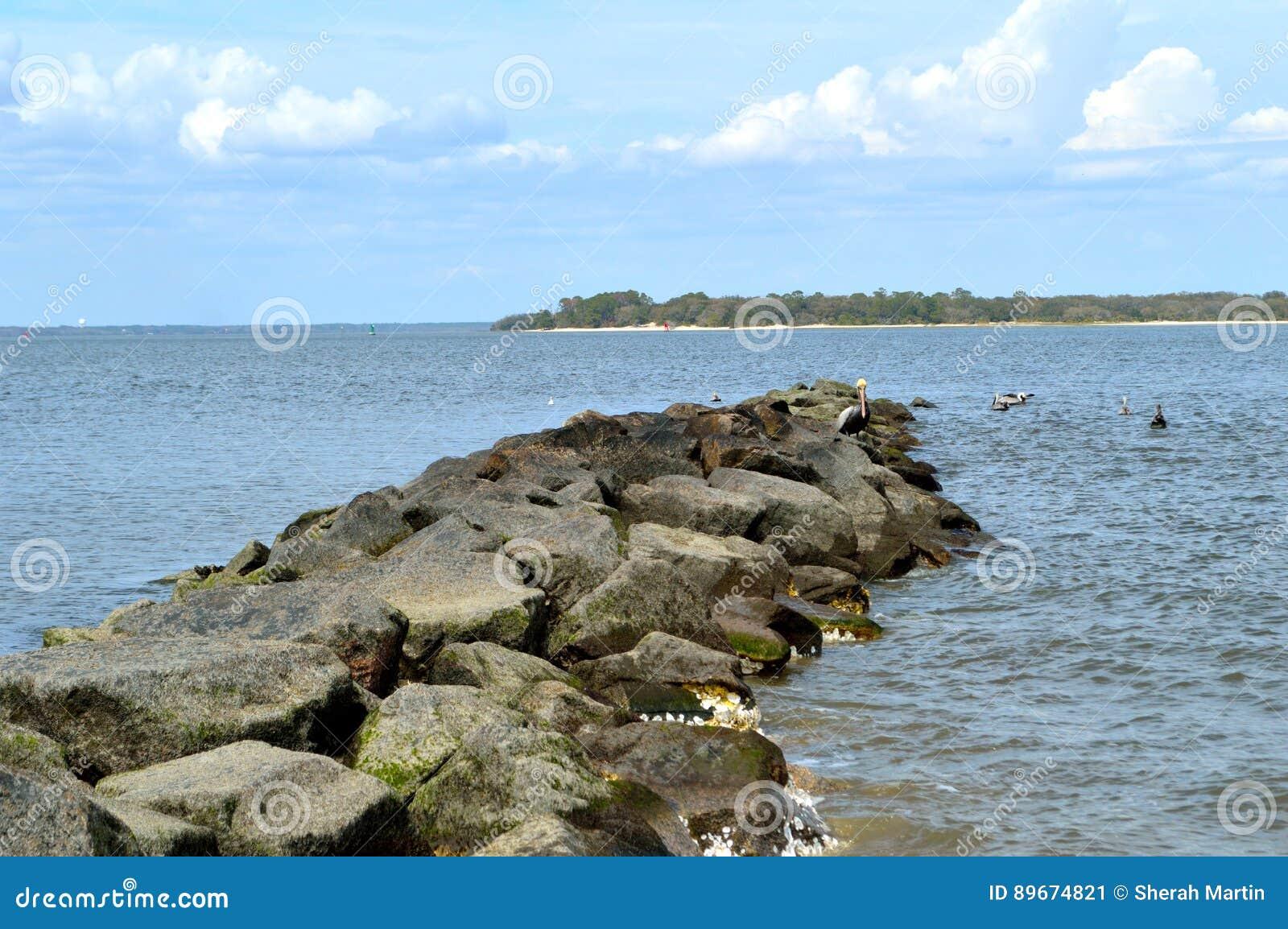 Pelikan sätta sig uppe på en vaggavägg i havet