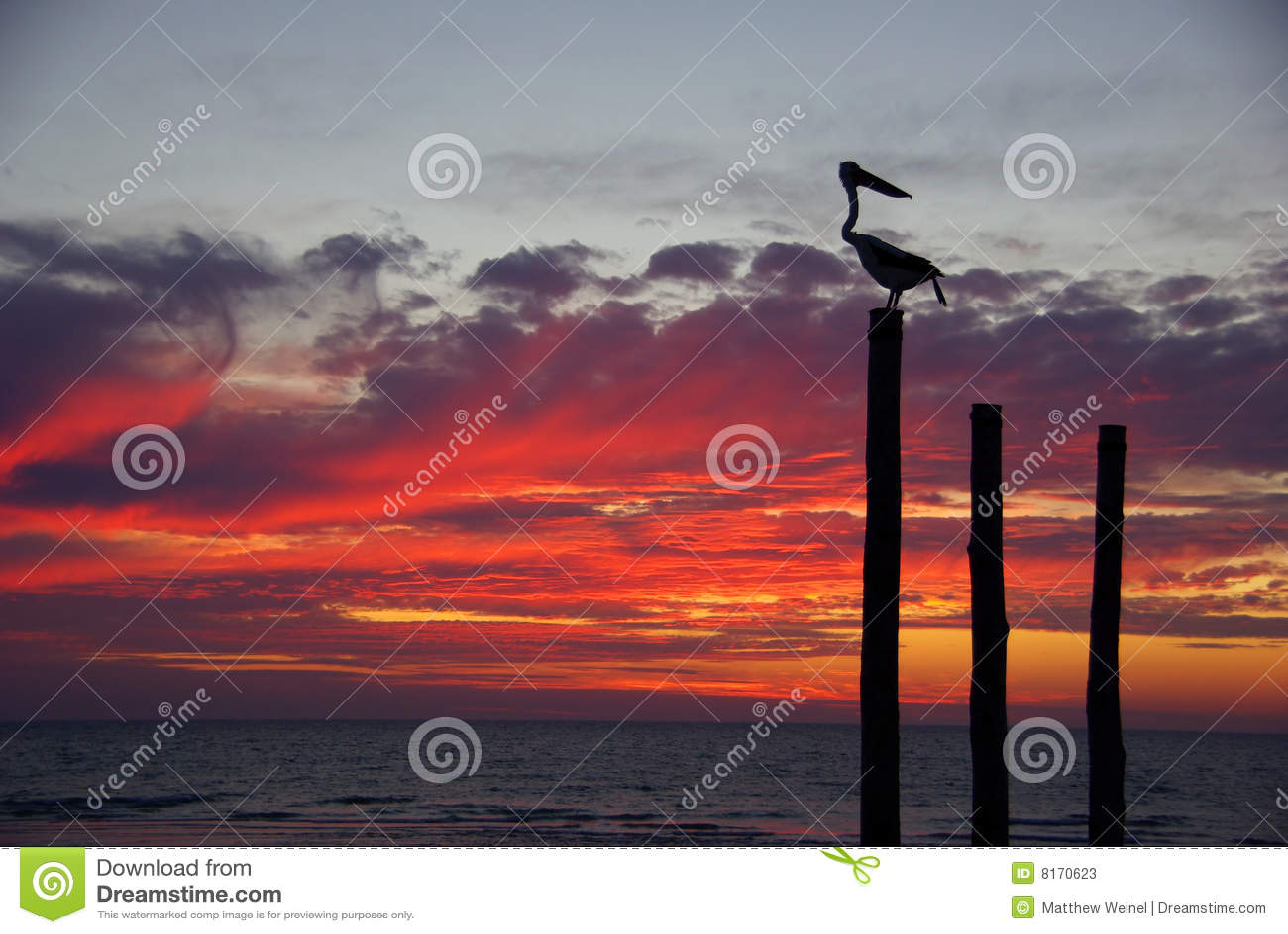 Pelikan-Sonnenuntergang