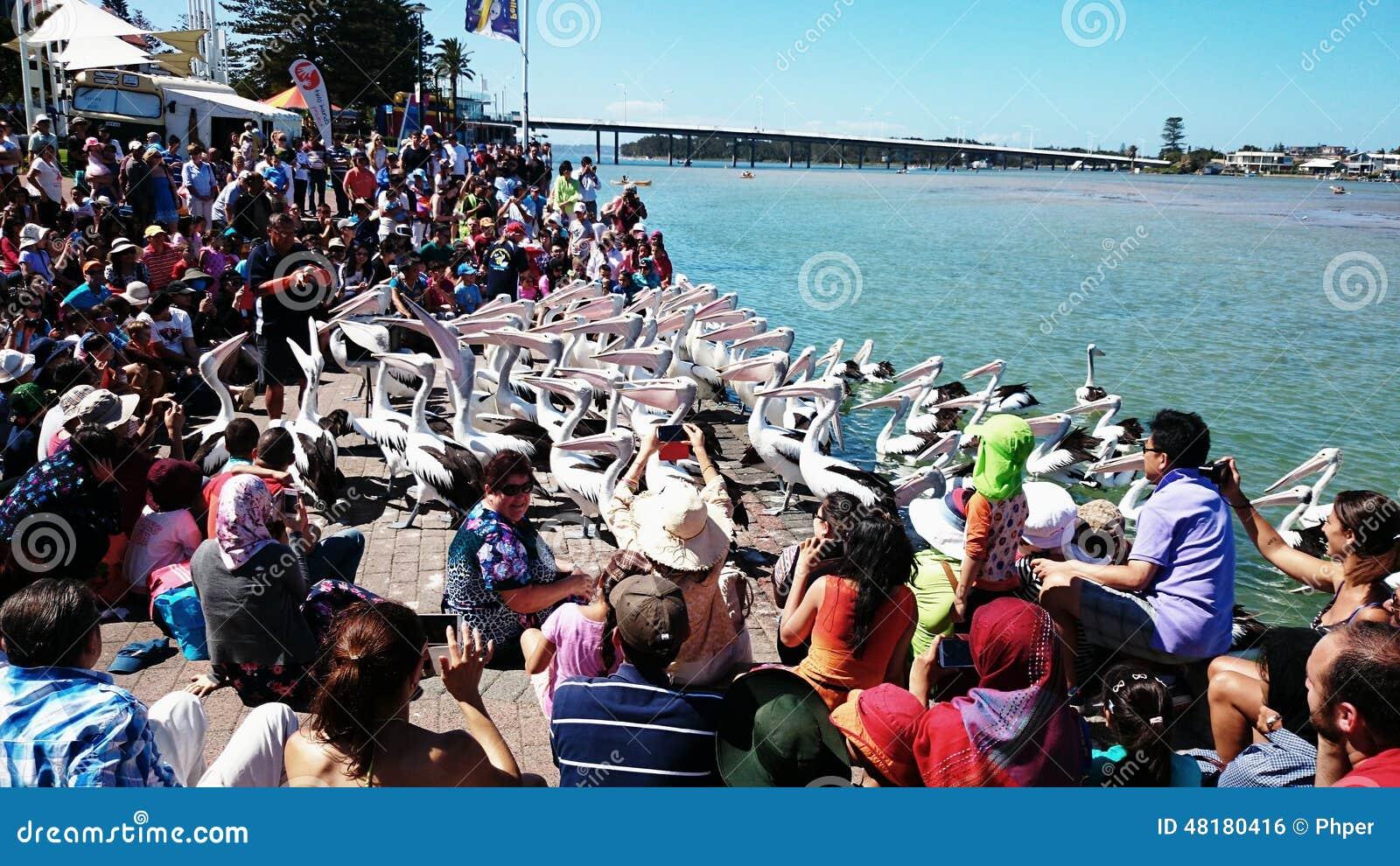 Pelikana karmienia przedstawienie