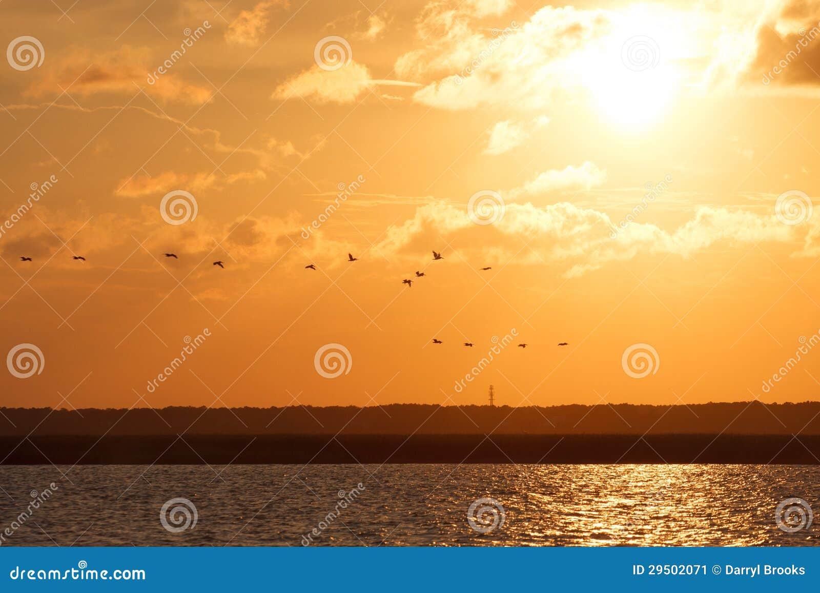 Pelikanen die bij Zonsondergang vliegen