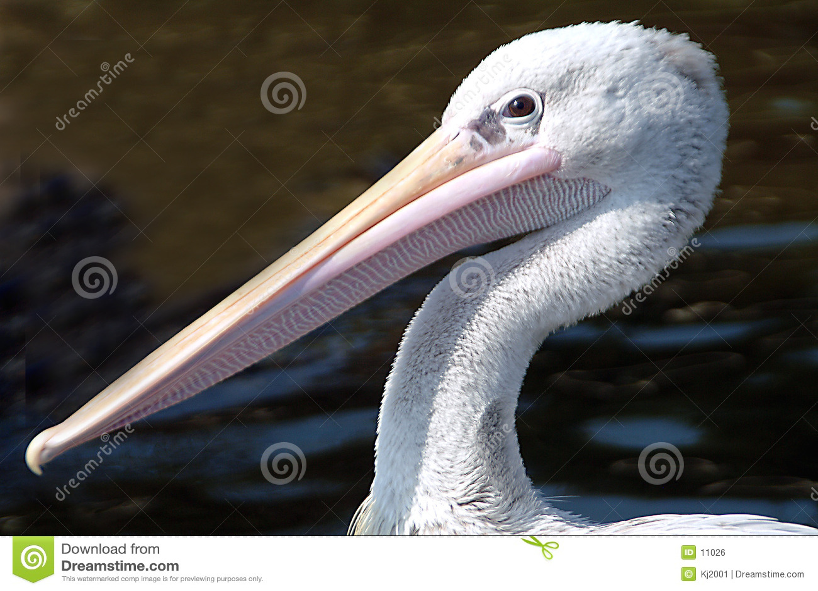 Pelikanprofil