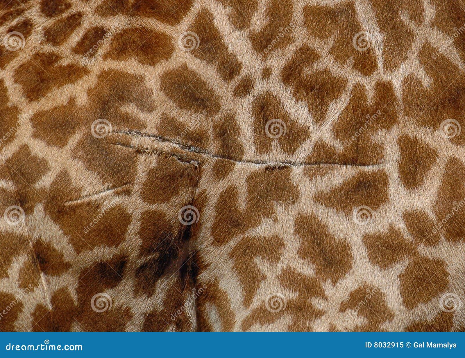 Pelliccia della giraffa