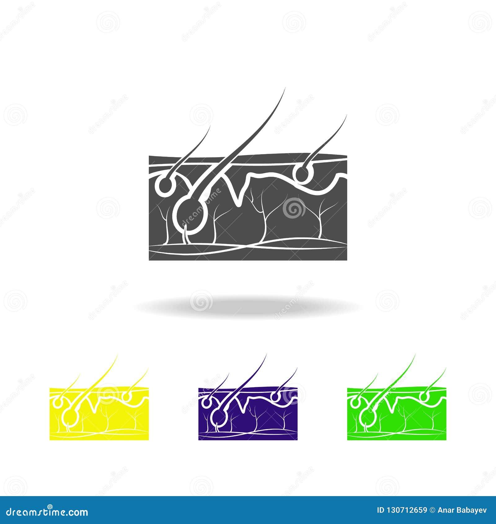 Pelo en los iconos multicolores del órgano de la piel Elemento de los iconos multicolores de las partes del cuerpo Muestras e ico