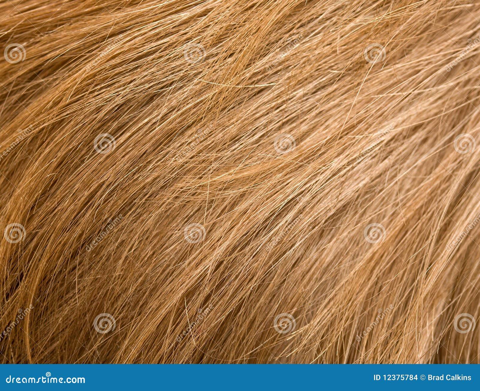 piojos en pelo rubio