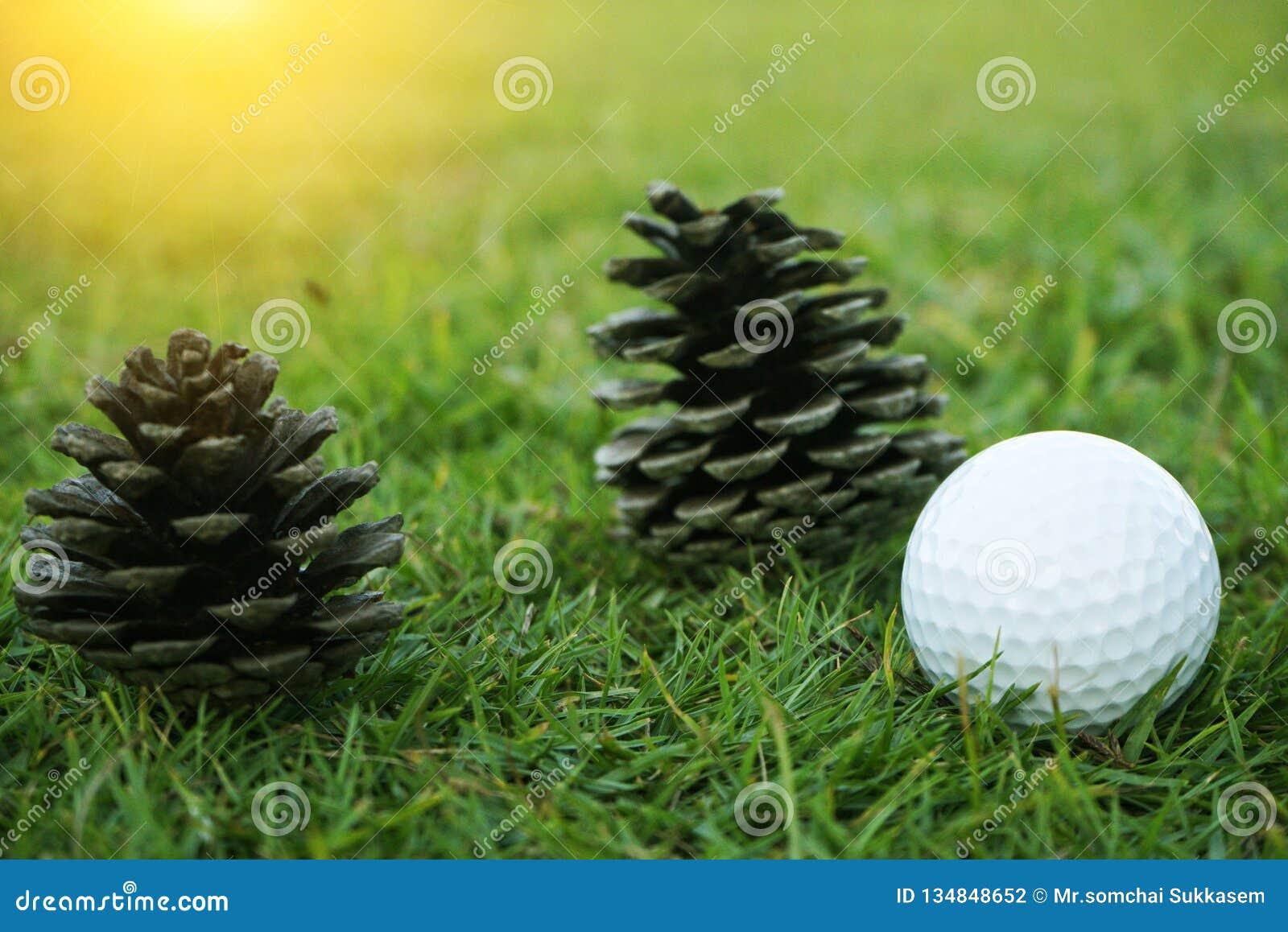 Pelota de golf en verde en campo de golf hermoso con puesta del sol Cierre de la pelota de golf para arriba en coures del golf en