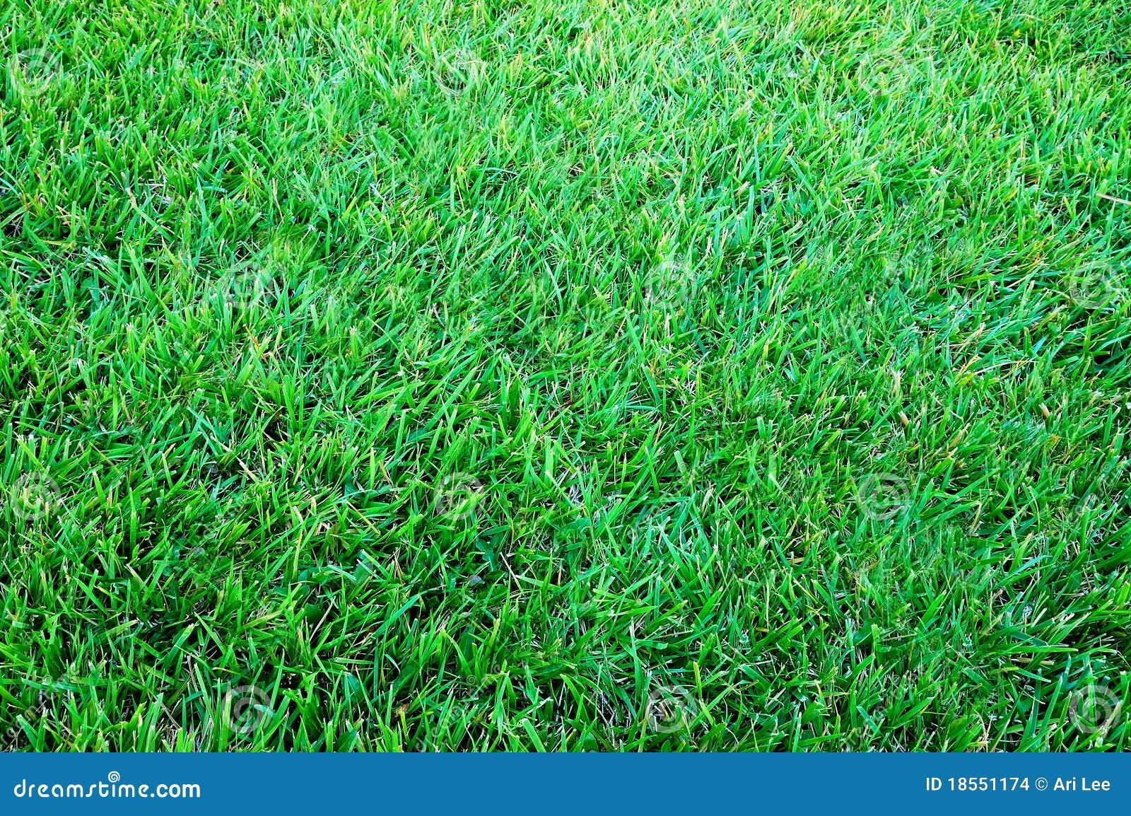 Pelouse photo stock image du herbeux fleur botanique for Prix de pelouse