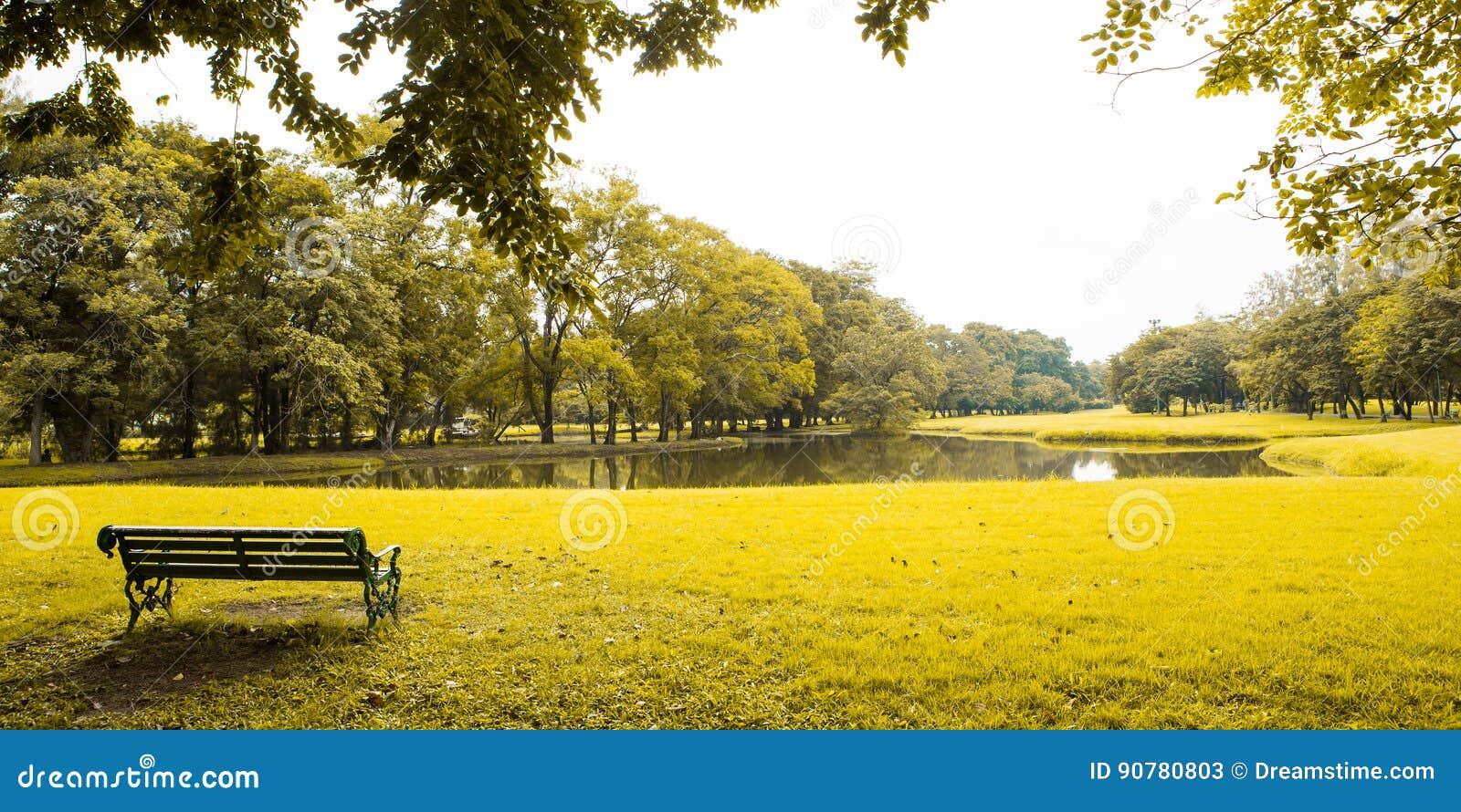 Pelouse et arbres verts