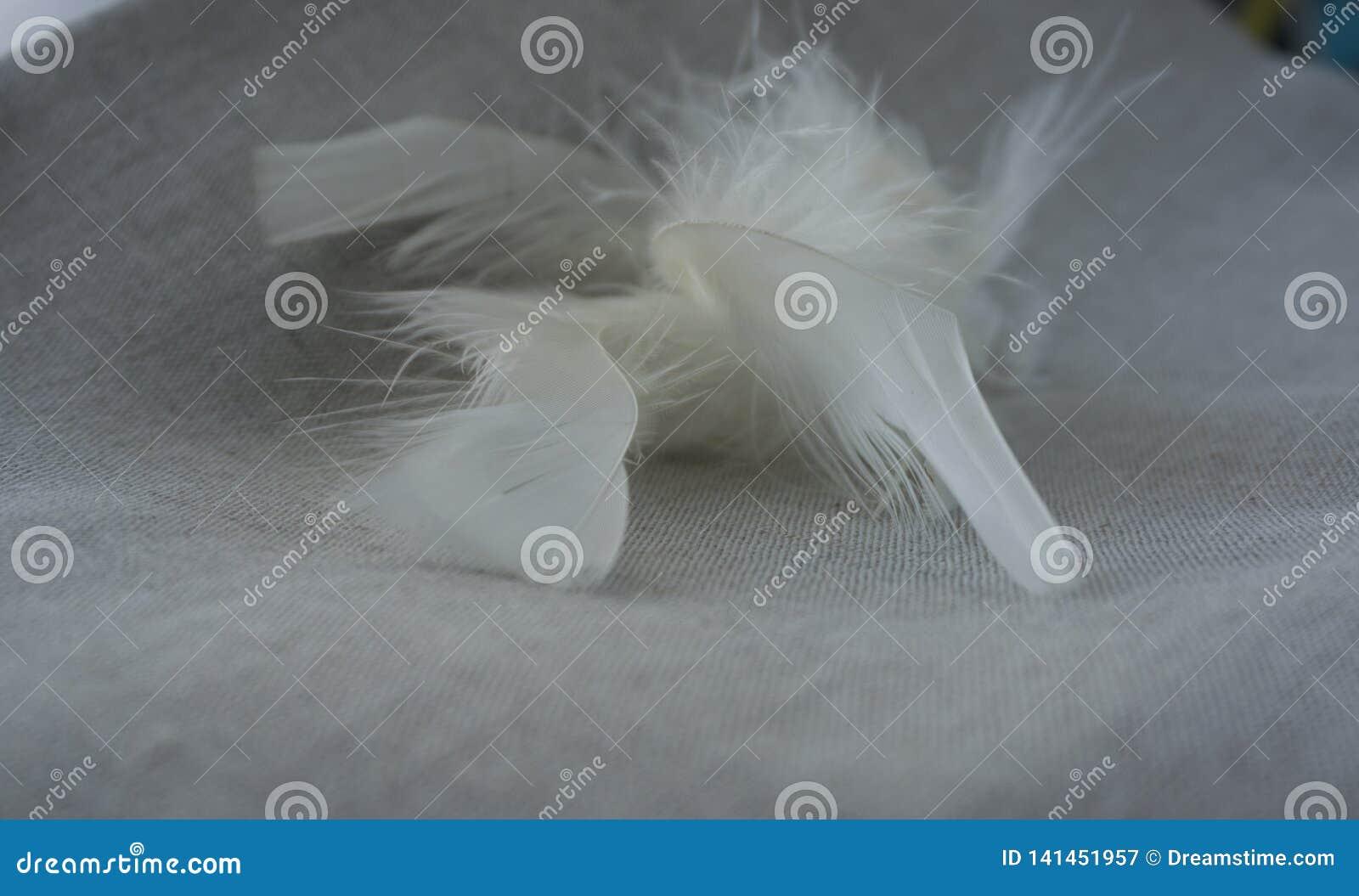 Pelusa y plumas blancas