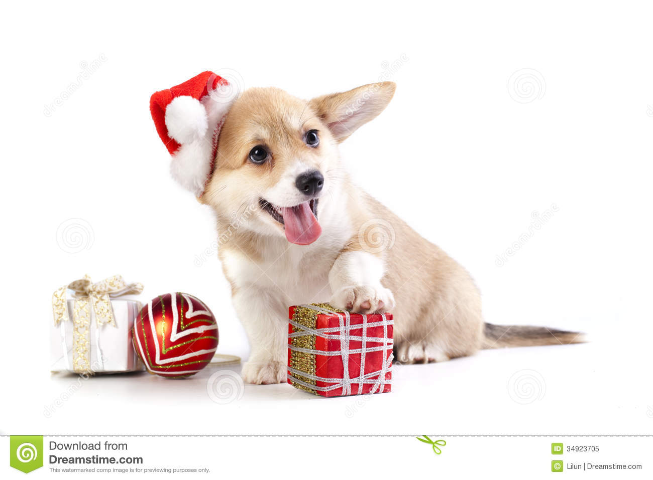 Pembroke Welsh Corgi Puppy Royalty Free Stock Photo - Image: 34923705