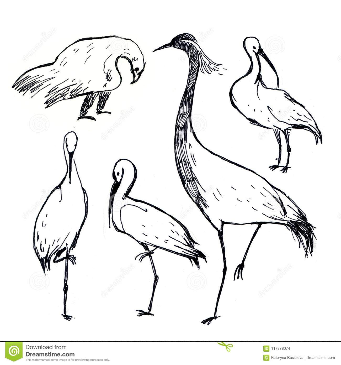 Black And White Pen Drawing Birds Isolated On White