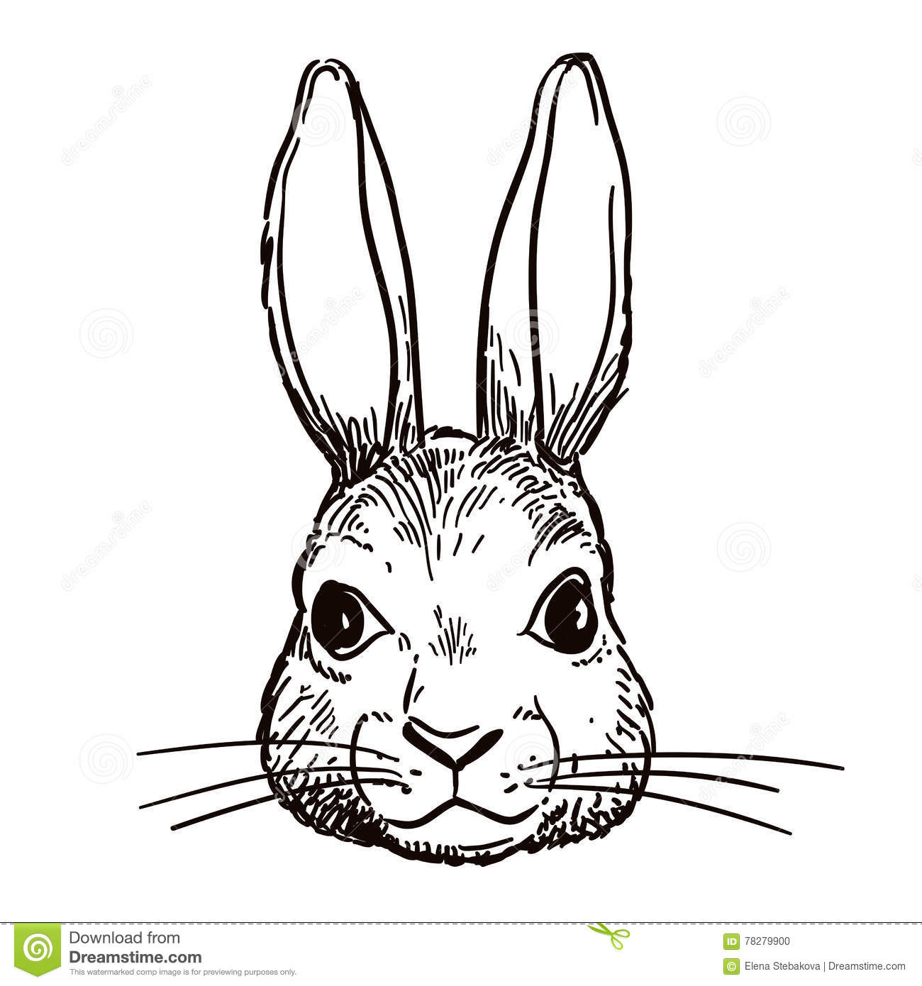 Bunny Face Line Drawing : Pen and ink rabbit head sketch stock vector illustration