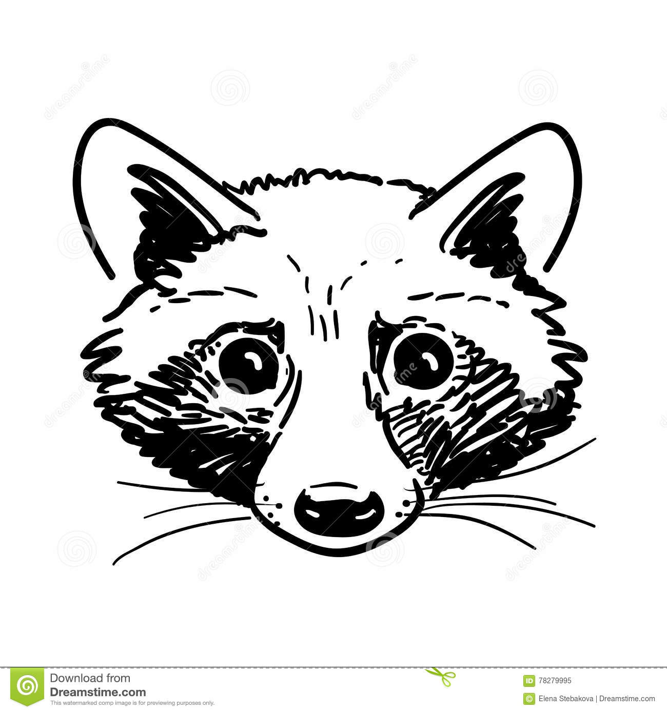 ink drawing of a raccoon royalty free stock image image 19816206
