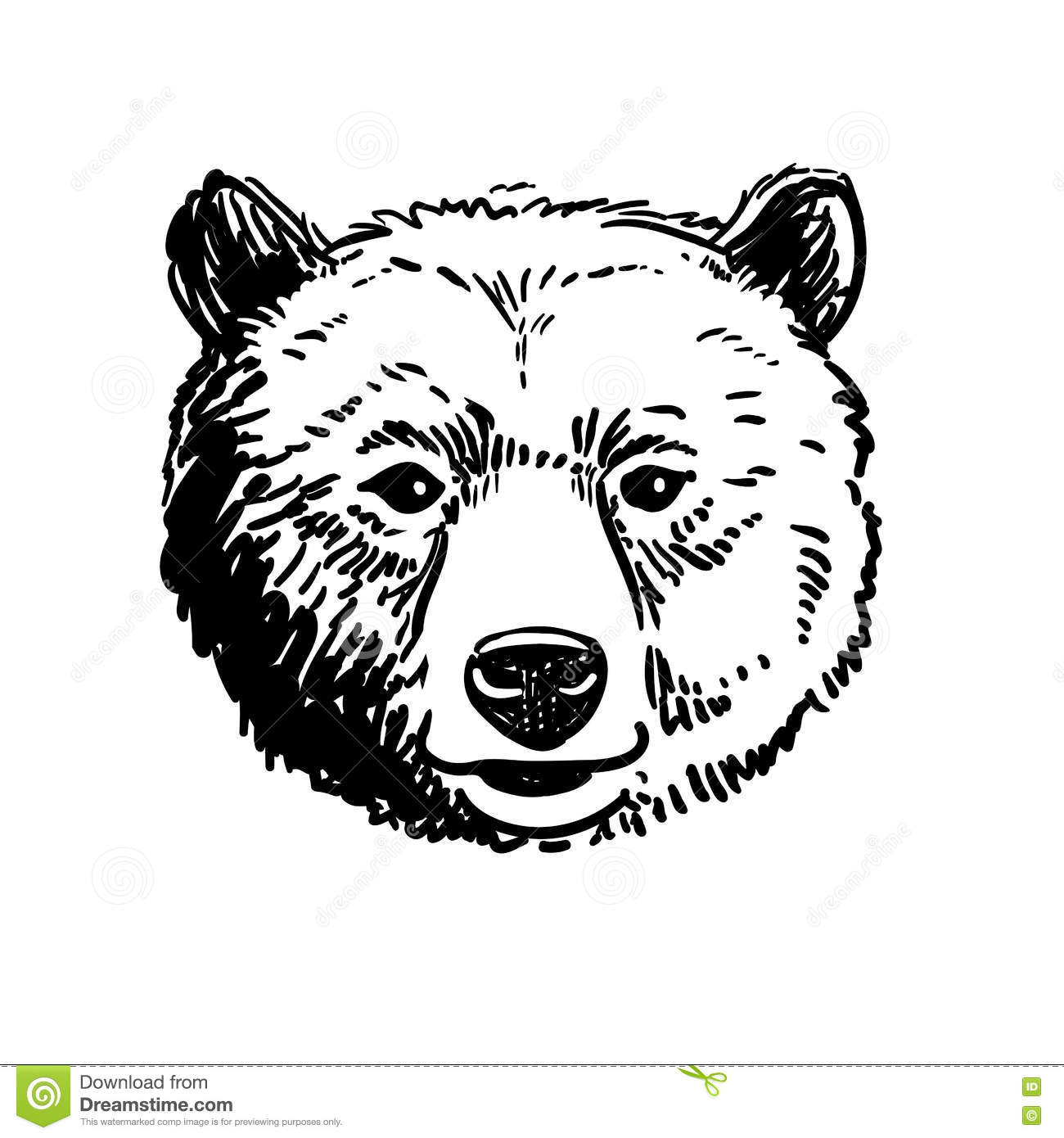 Pen And Ink Sketch Of A Bear Head Stock Vector - Image ... Bear Face Drawing