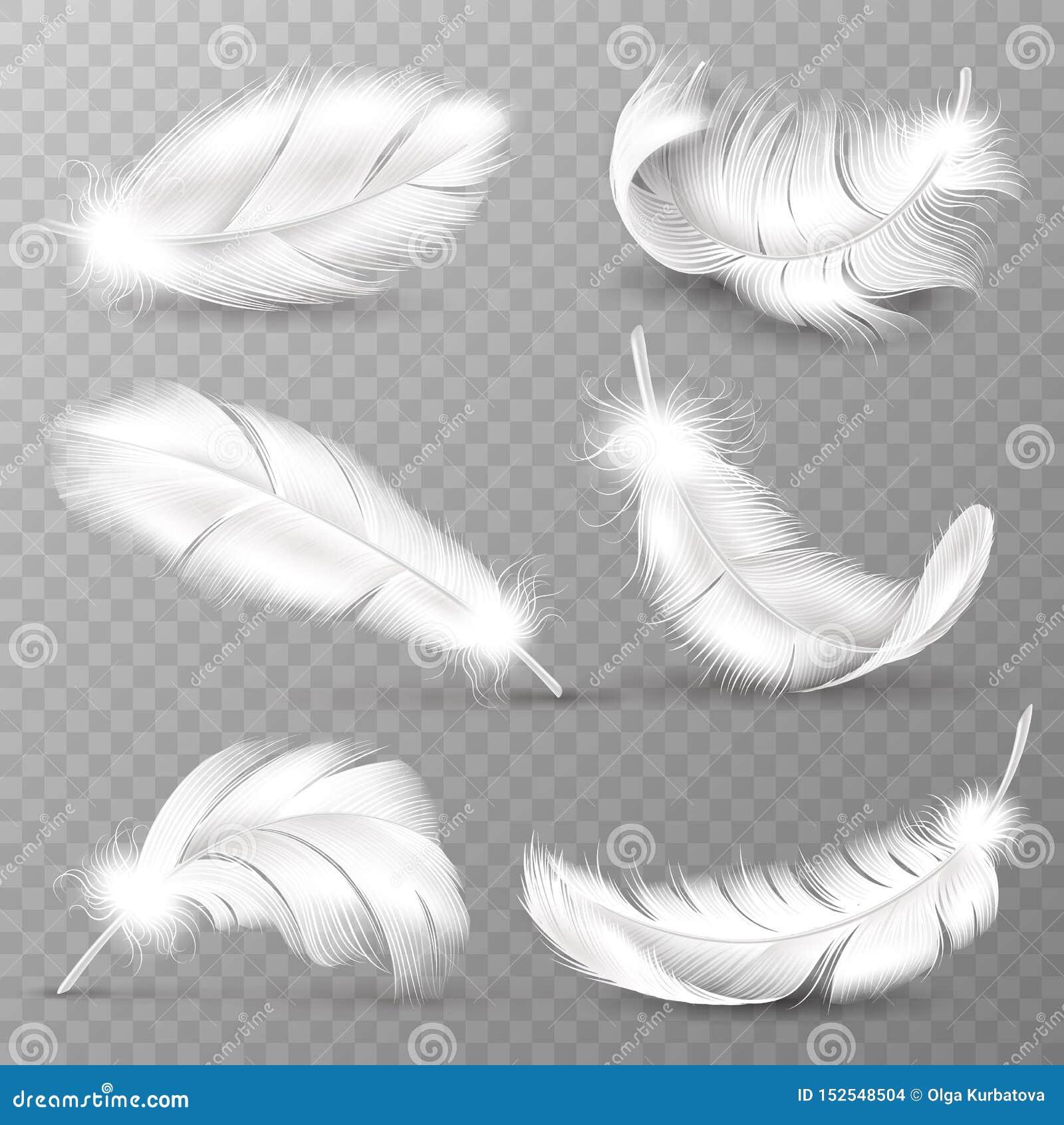 Penas brancas realísticas Plumagem dos pássaros, pena rodopiada macia de queda, penas das asas do anjo do voo Real?stico isolado