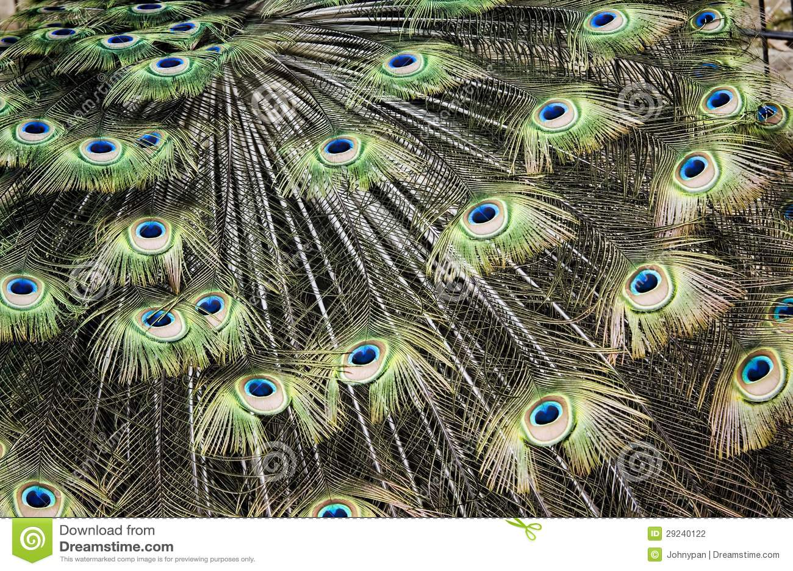 Download Penas do pavão foto de stock. Imagem de marrom, peacock - 29240122