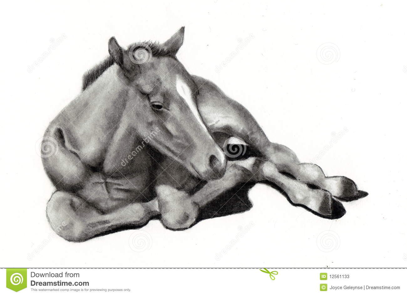 Pencil Drawing Of Baby Horse Stock Illustration Illustration Of Ranch Freehand 12561133