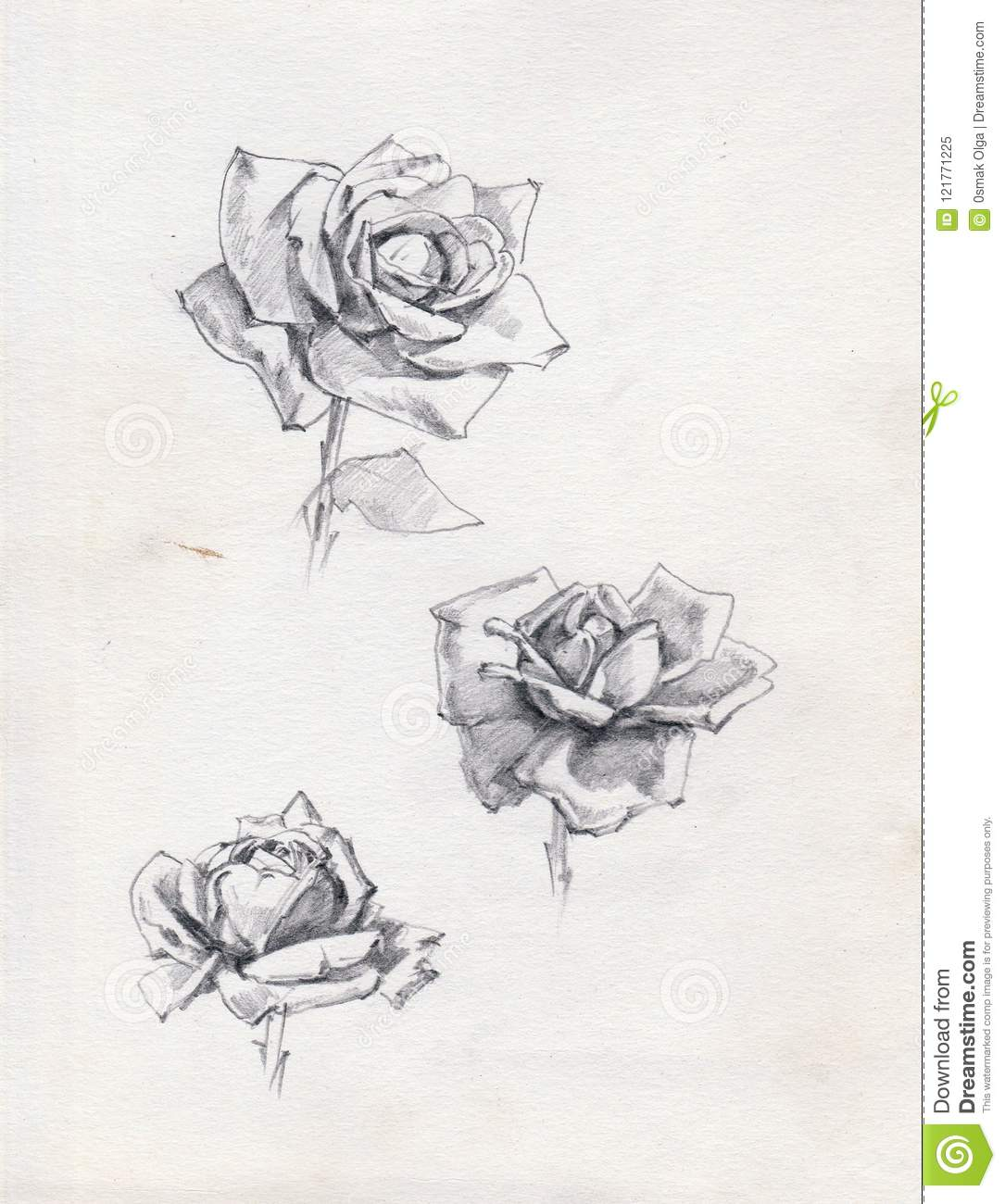 Pencil drawing background floral pattern handmade beautiful tender romantic rose flowers