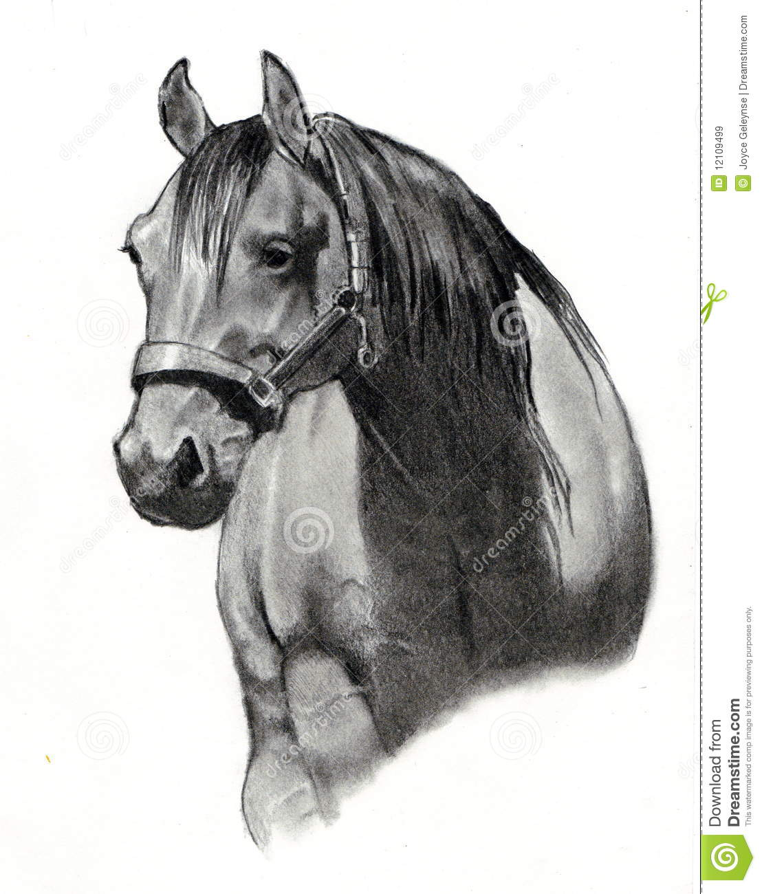Drawing Horse Pencil