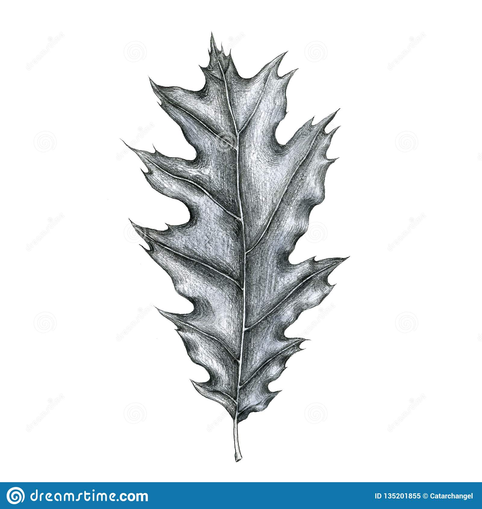 Pencil drawing leaf