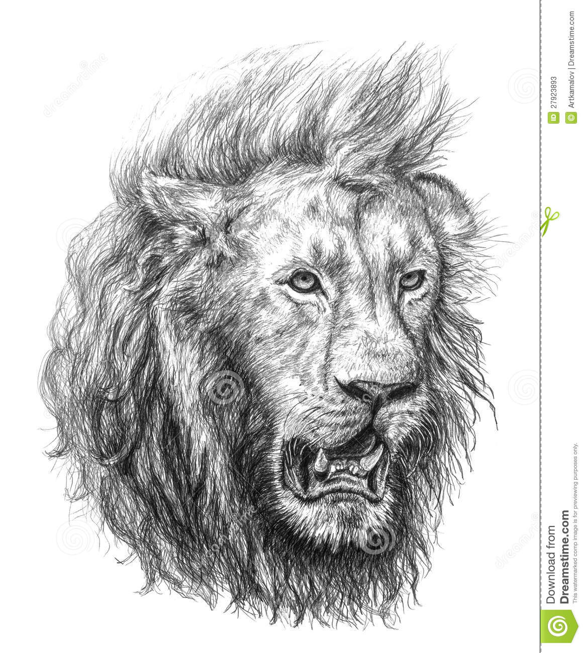 Stock photos pencil drawing of a lion s head image 27923893