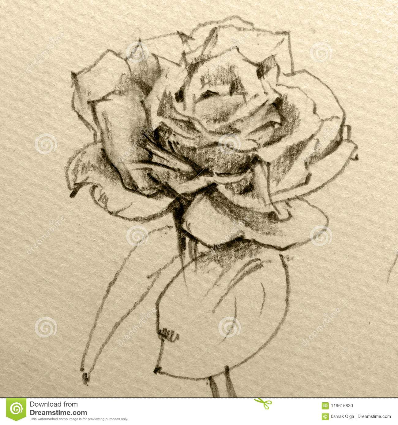 Abstract decorative background floral pattern handmade beautiful tender romantic spring rose flower made in the technique pencil drawing from nature