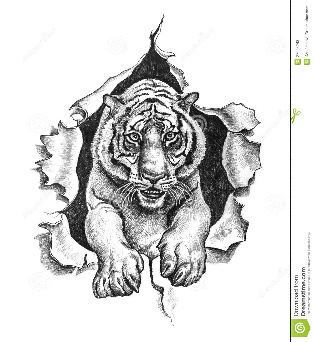 Pencil Drawing Of A Tiger Stock Photos - Image: 27925243