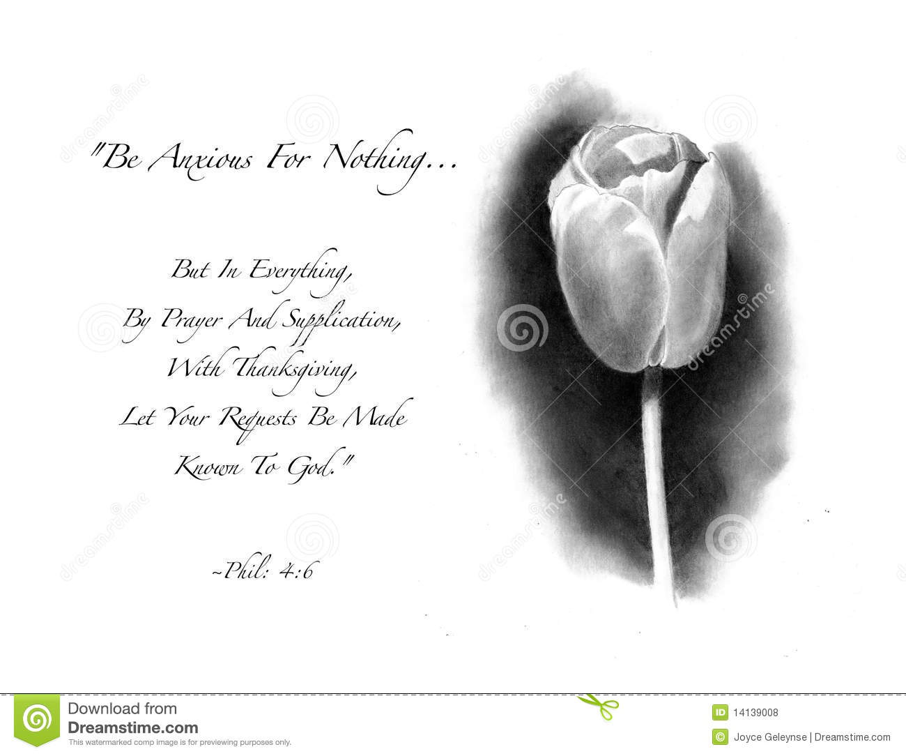 Pencil Drawing Of Tulip With Bible Verse Royalty Free Stock Photos ...