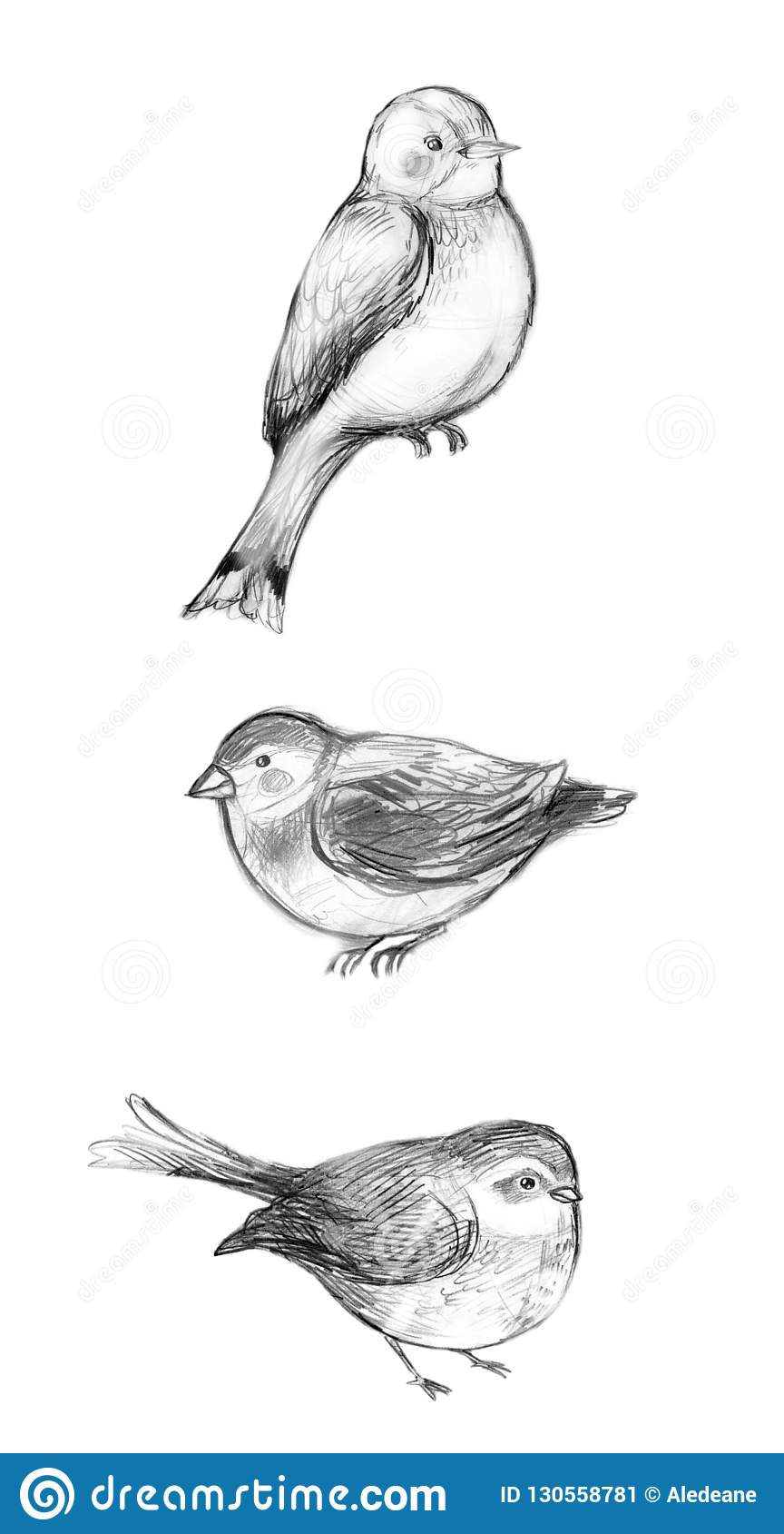 Monochrome sketches done in pencil featuring three cute birds isolated on white drawn in realistic style