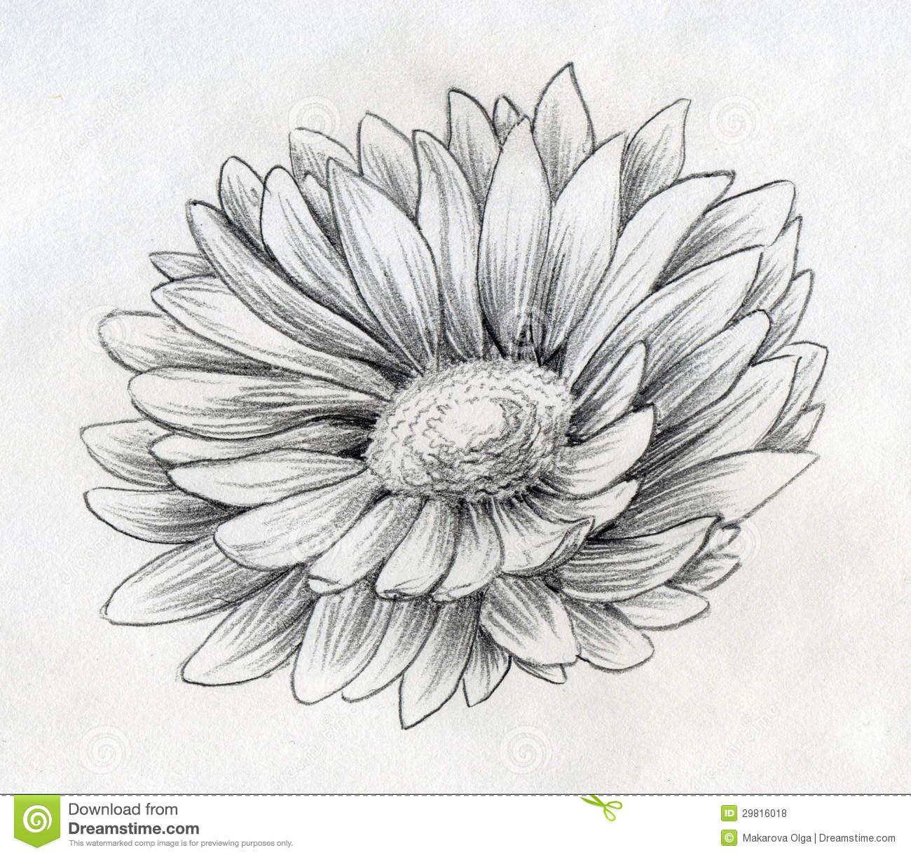 Daisy flower pencil sketch stock illustration illustration of daisy flower pencil sketch izmirmasajfo