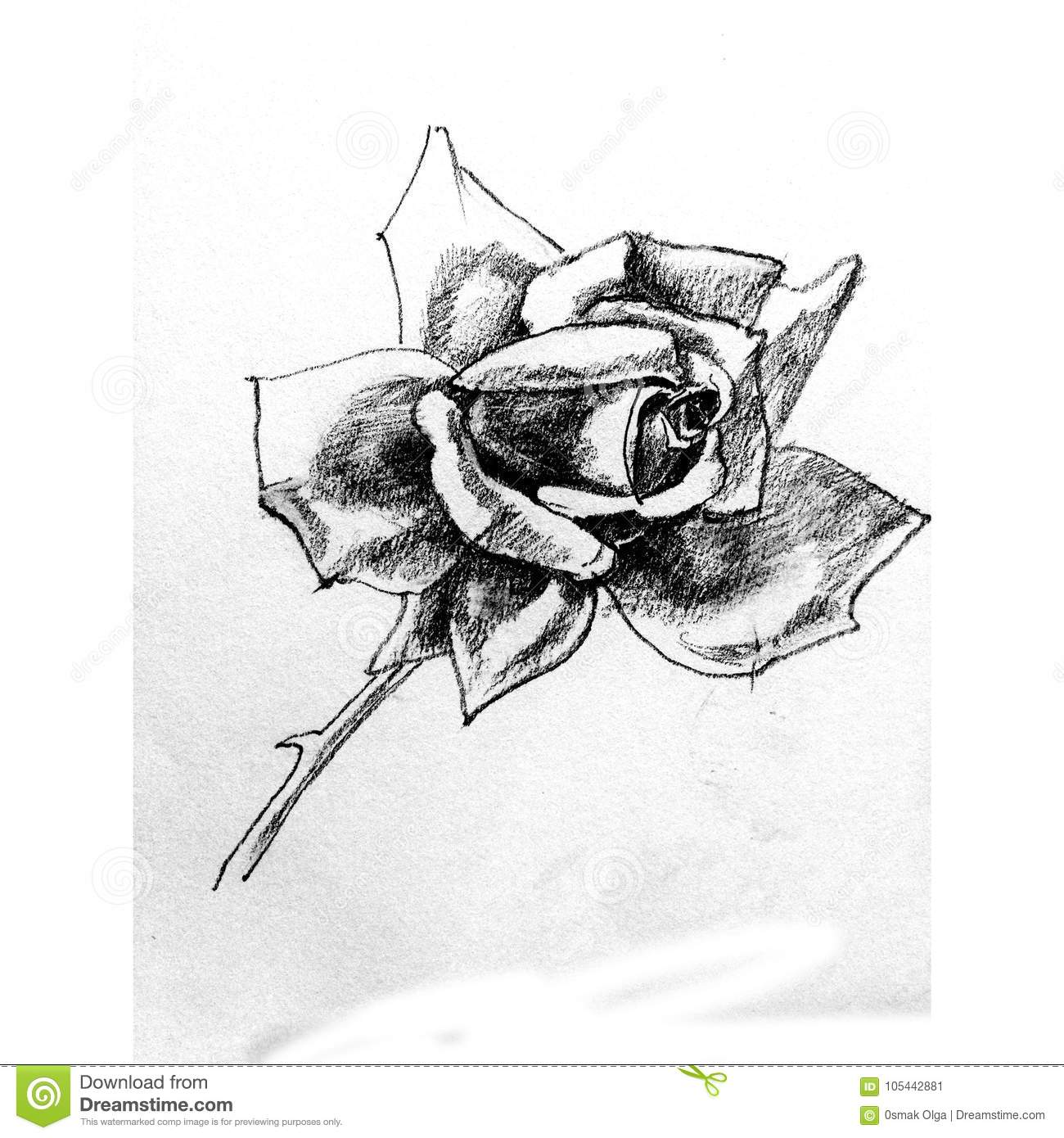 Pencil Pattern Floral Flower Rose Single Outline Nature