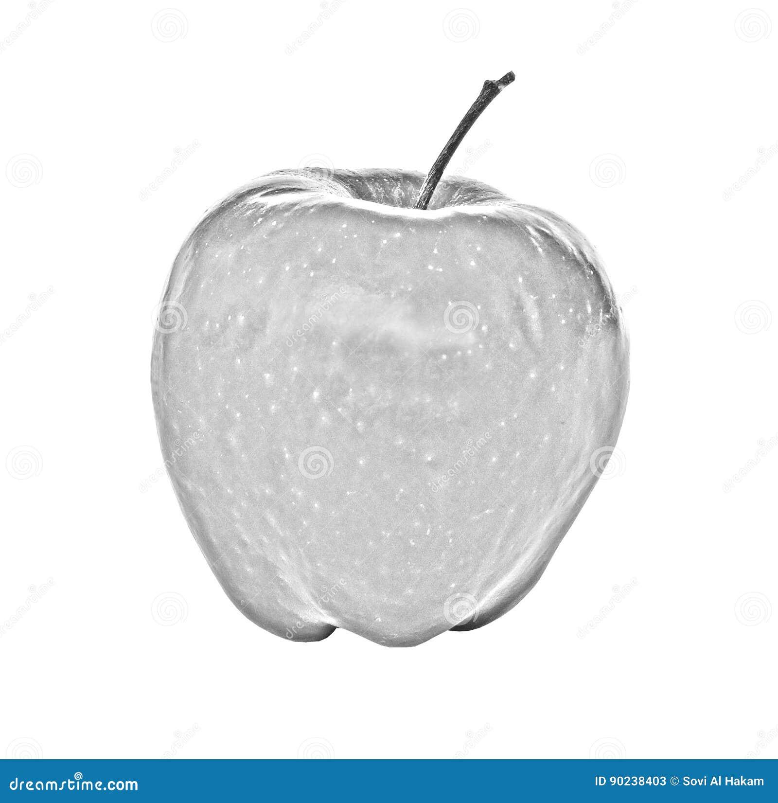 Pencil sketch of apple stock image image of sketch pencil 90238403