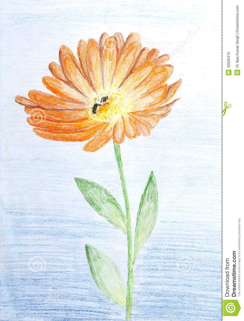 pencil sketch of calendula flower stock illustration