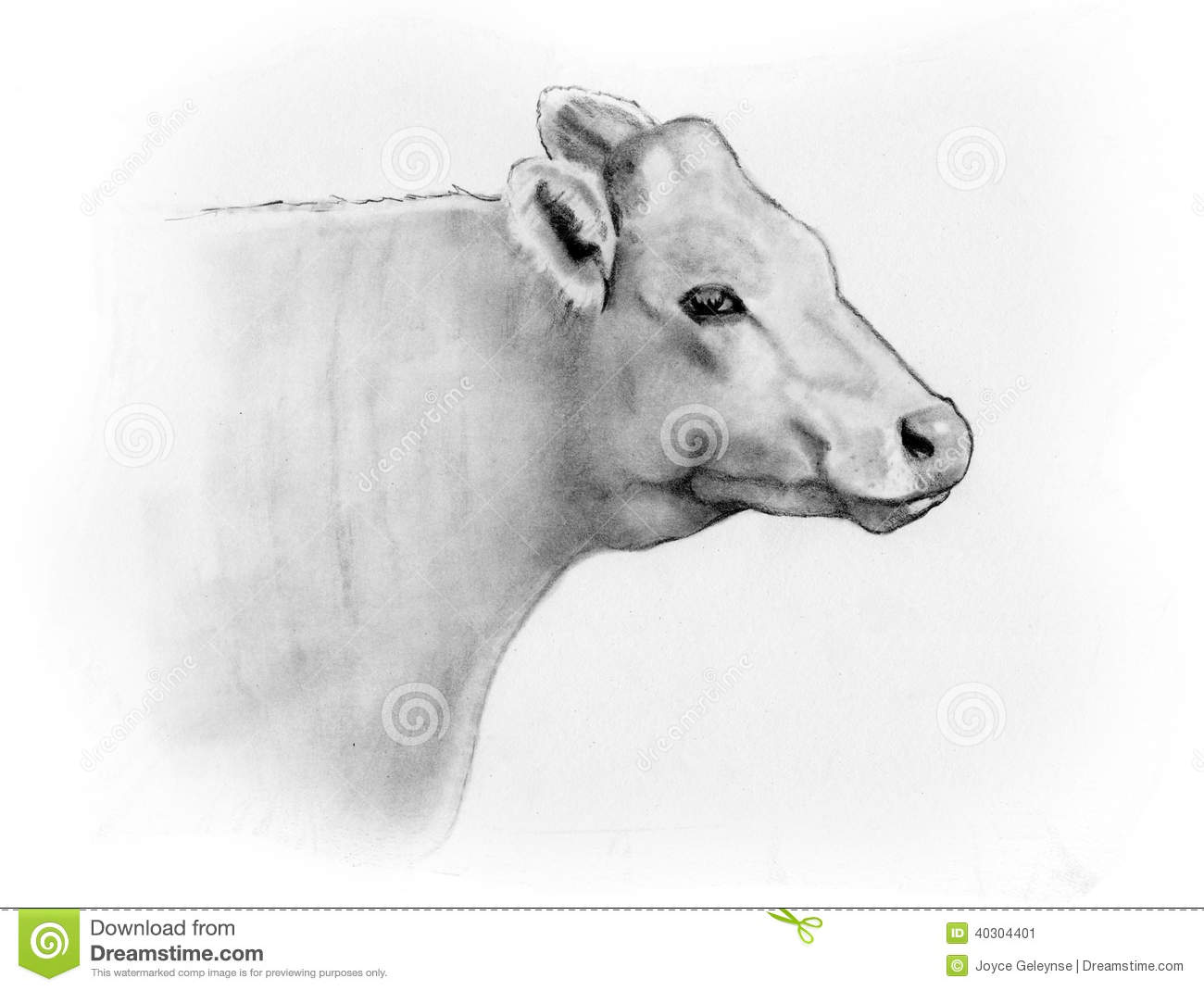 Pencil Sketch Of A Cow's Head, Side View Stock Illustration