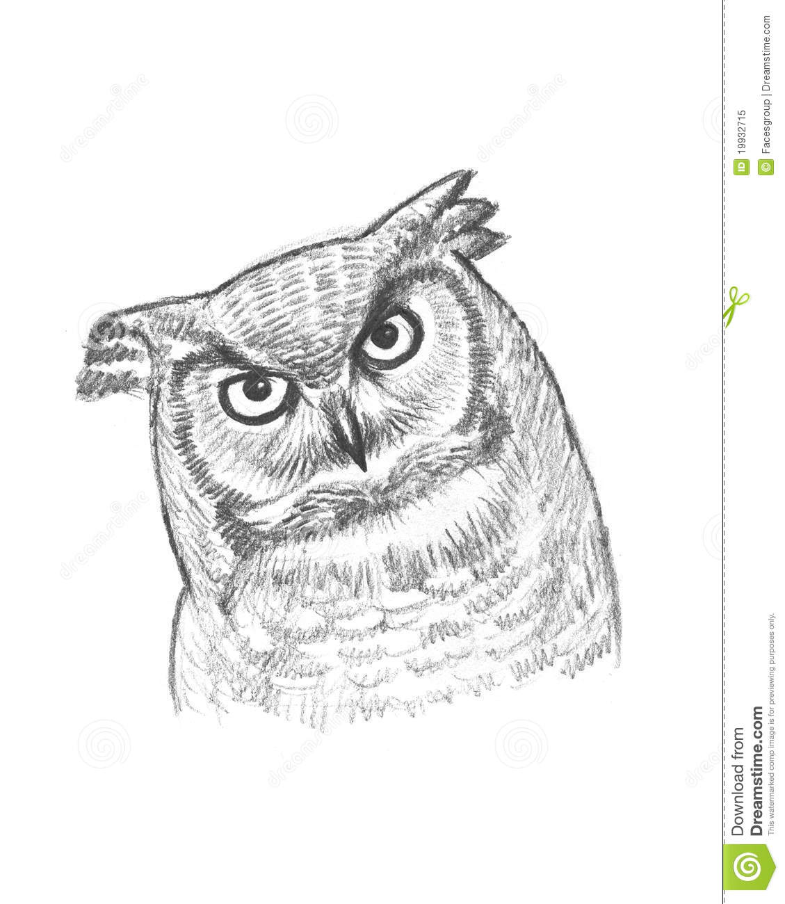 A pencil sketch of an owl stock illustration illustration of