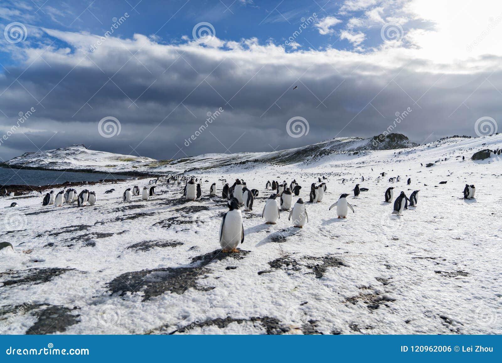 The Penguin Family in the sun.Antarctica