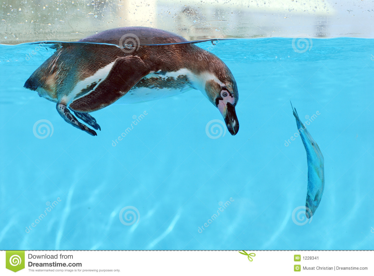 penguin and fish stock image image 1228341