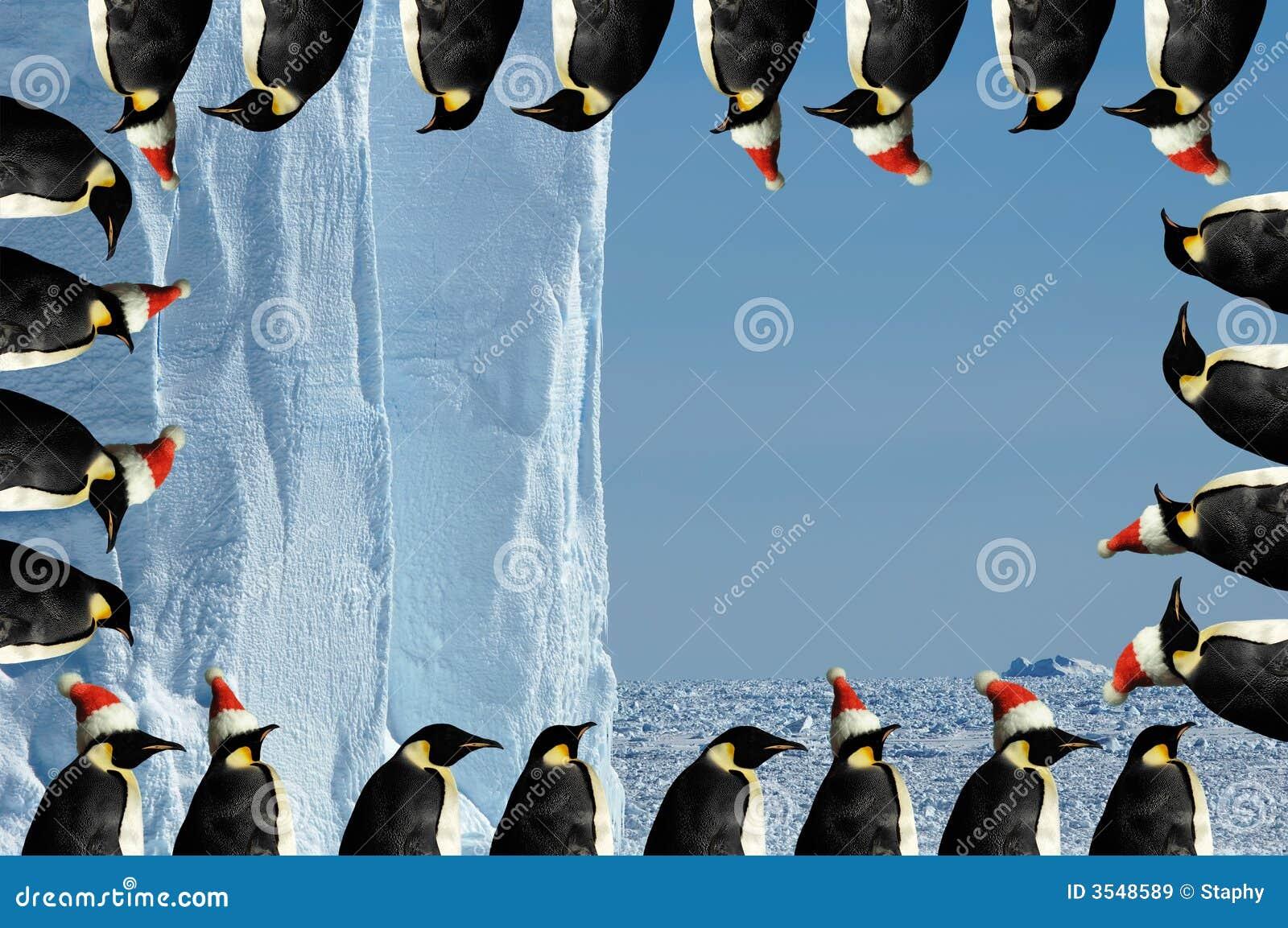 Penguin frame christmas card stock image image 3548589 for Penguin christmas cards homemade