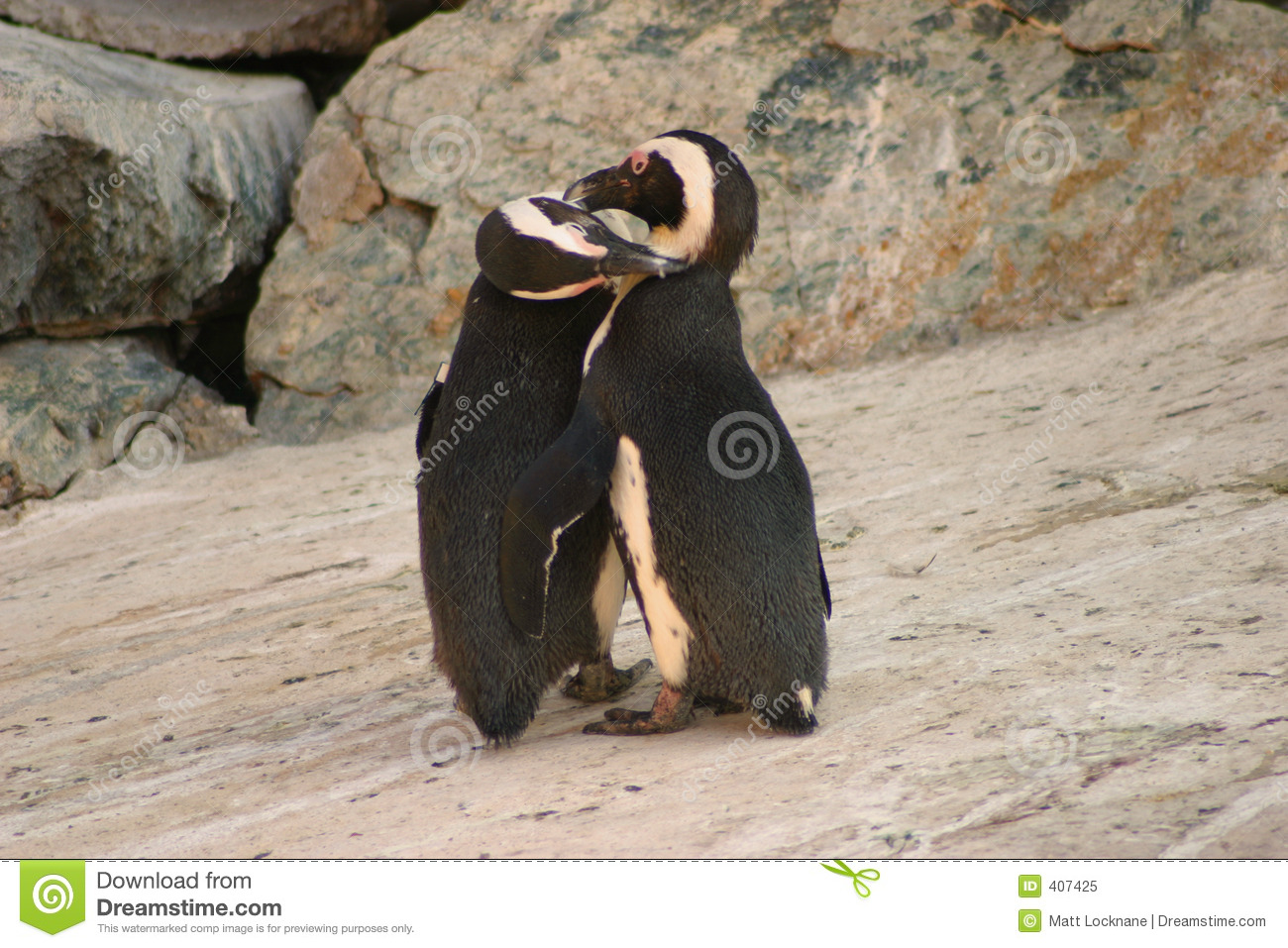 Aninimal Book: Penguin Kisses stock image. Image of friends, embrace ...