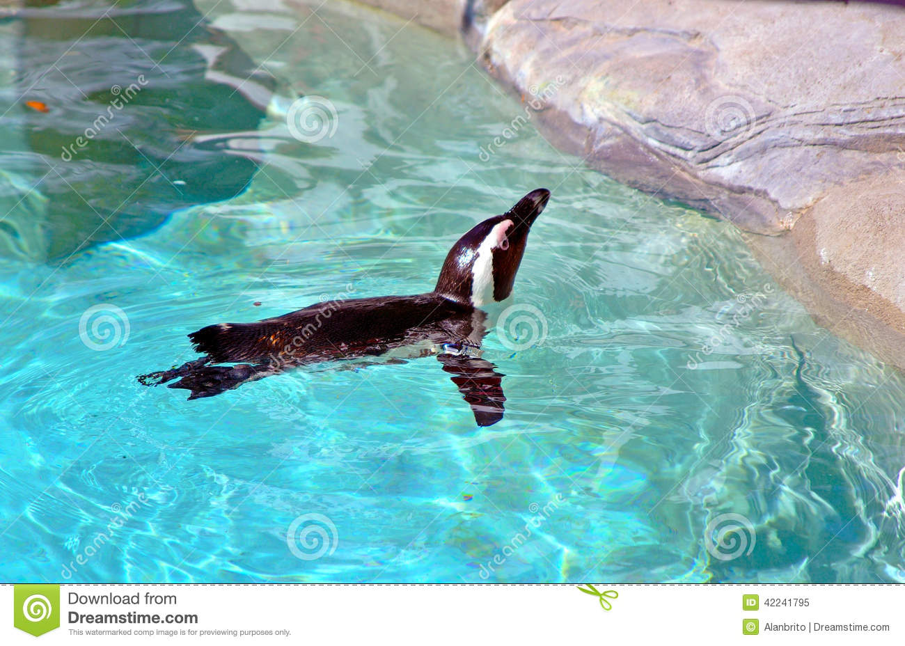 Penguin Swimming In A Pool Stock Photo Image 42241795