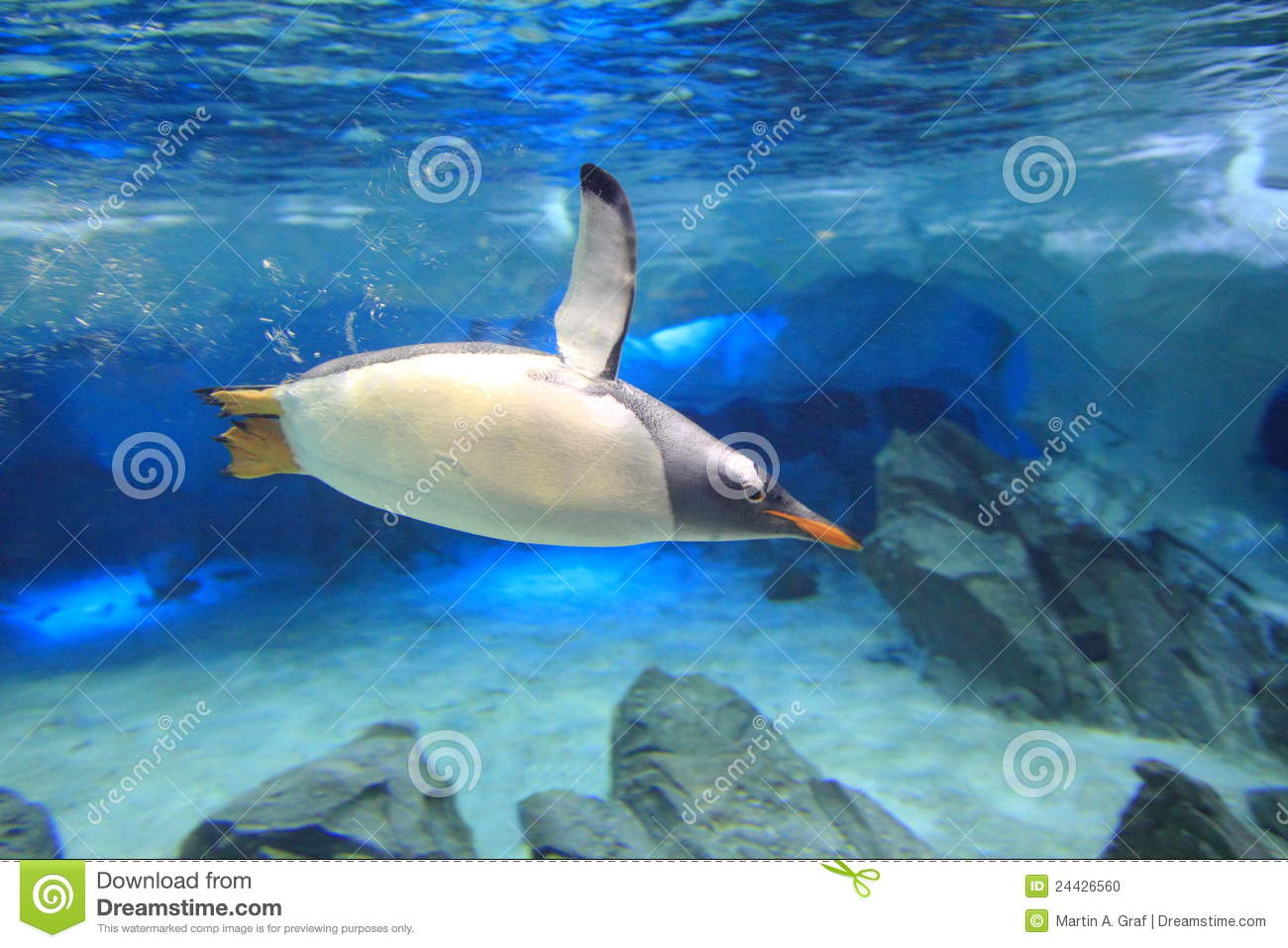 Penguin underwater in sea cave scenery