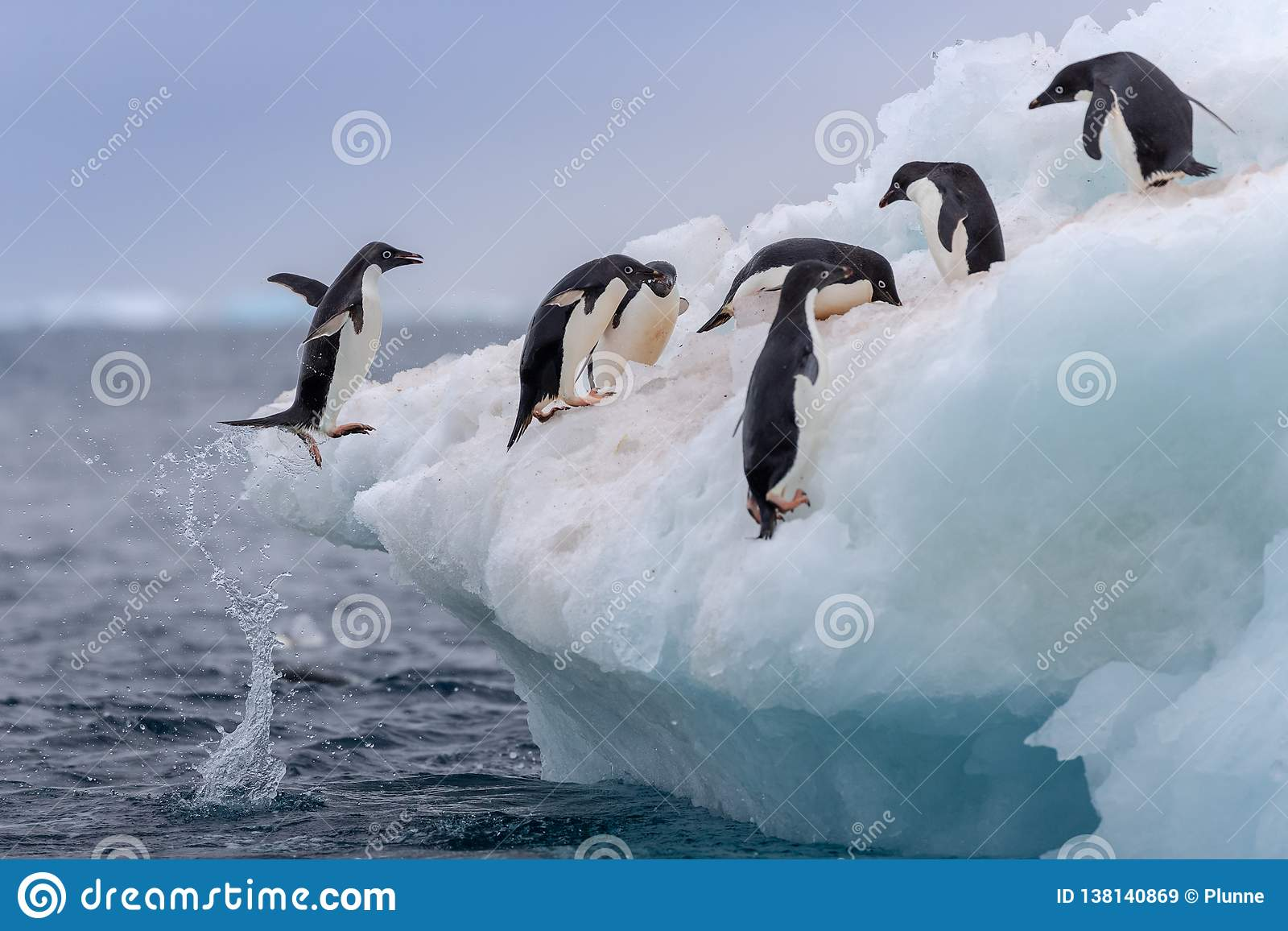 Penguine de salto de Adélie