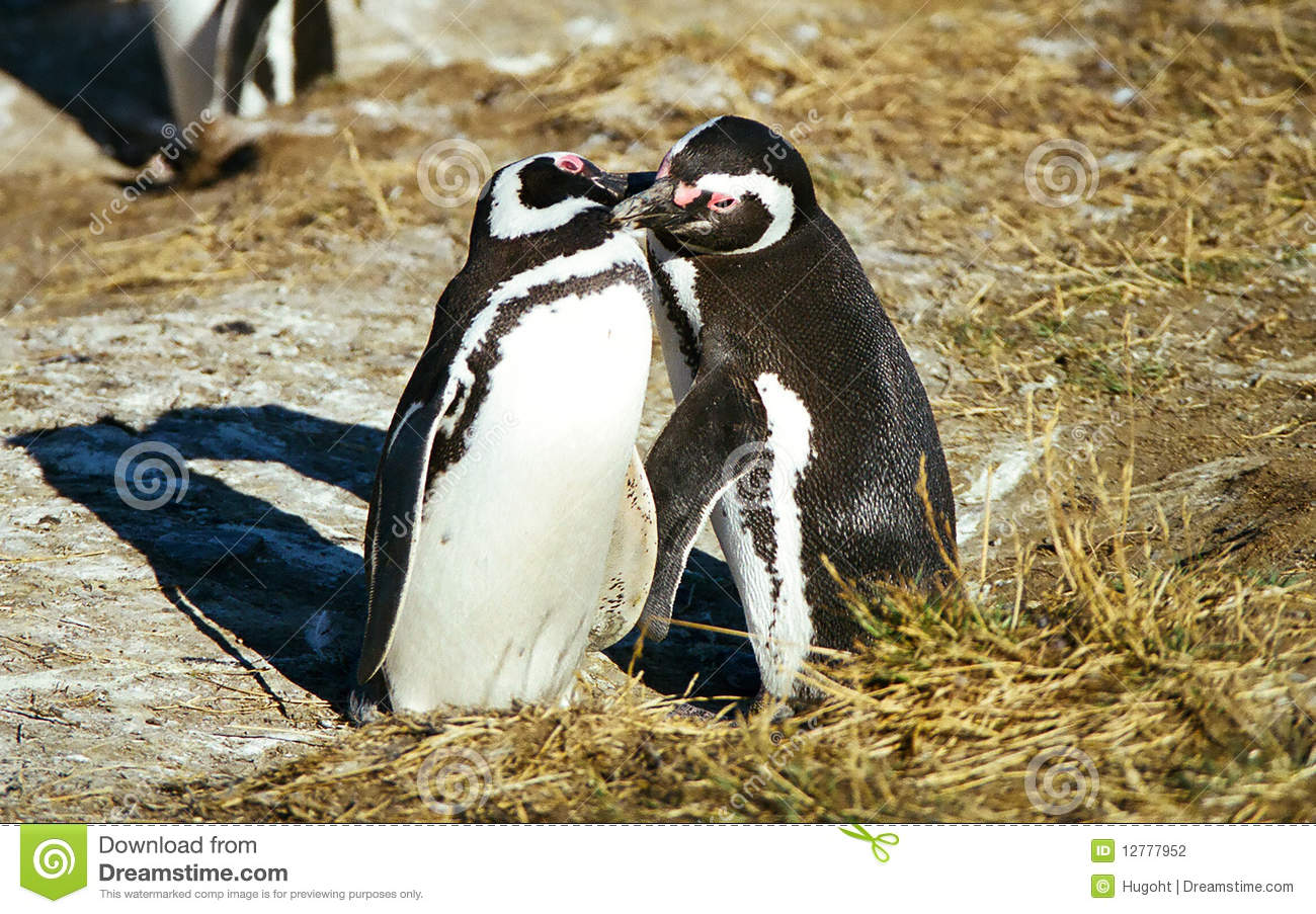 Aninimal Book: Penguins kissing stock photo. Image of monument, feathers ...