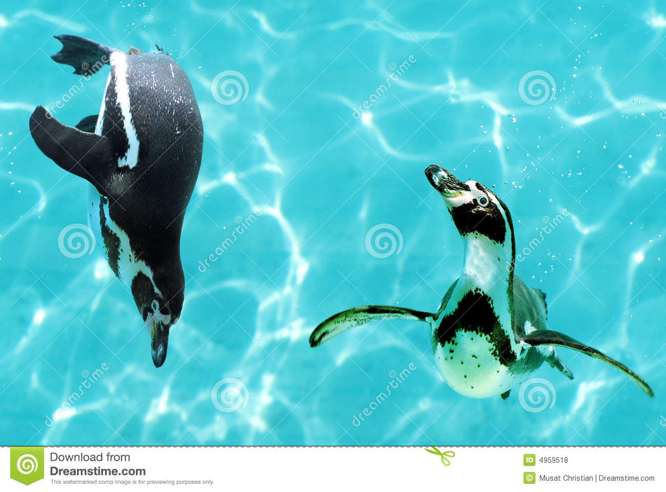 Penguins Under Water Royalty Free Stock Photos - Image ...