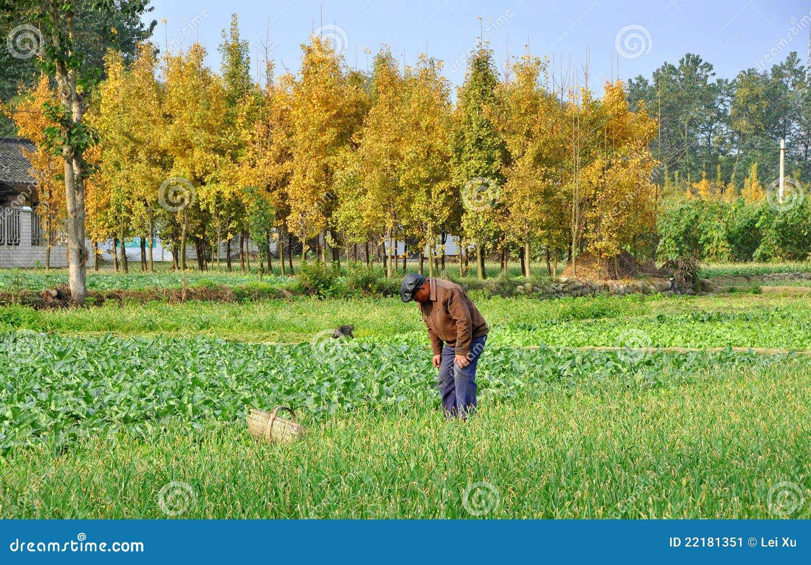 Pengzhou πεδίων αγροτών της Κίνας