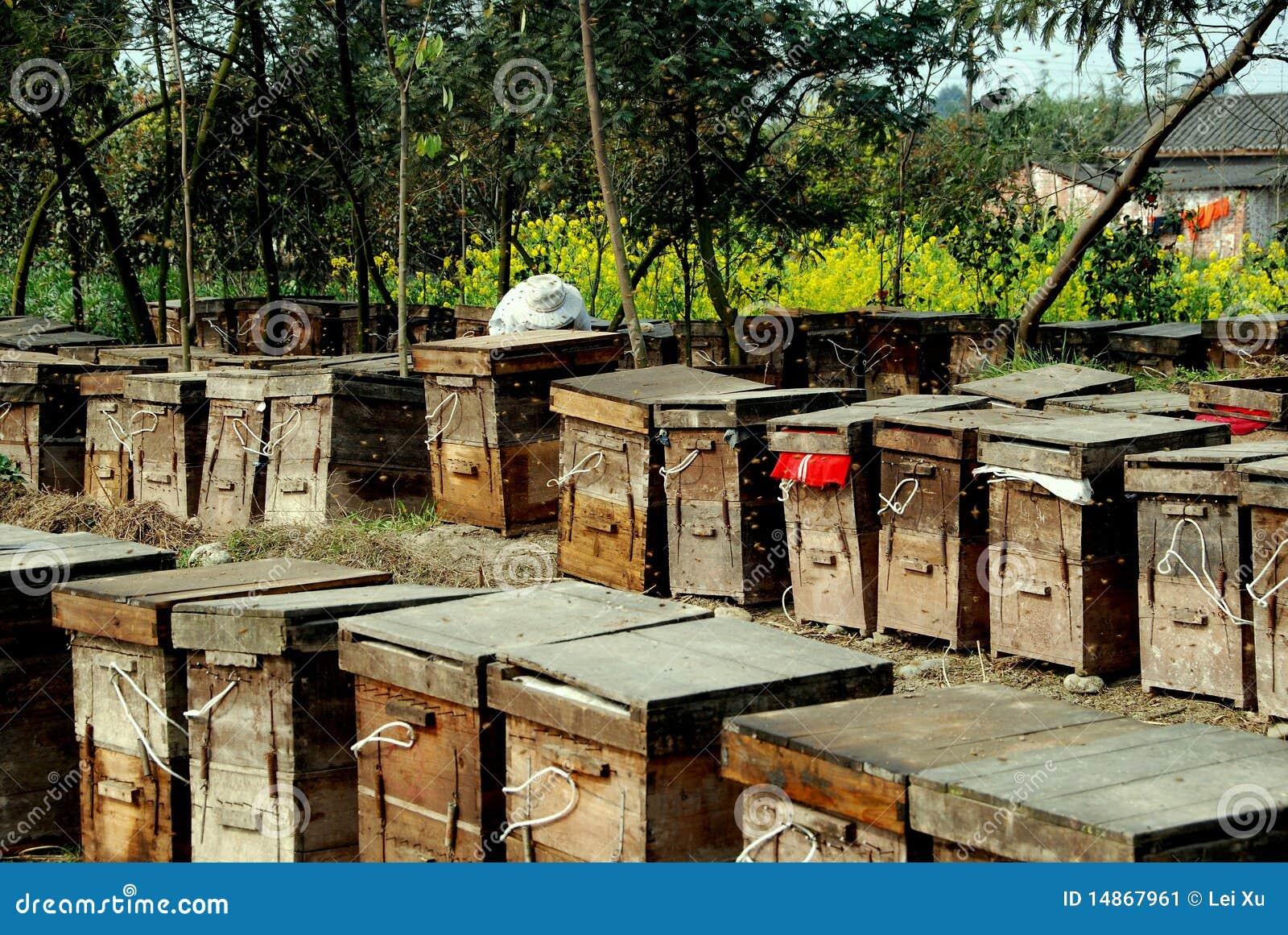 Pengzhou China Bee Hive Boxes