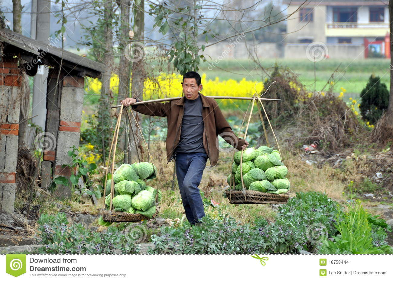 chinese farmers - photo #42